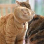 Drill_Cat